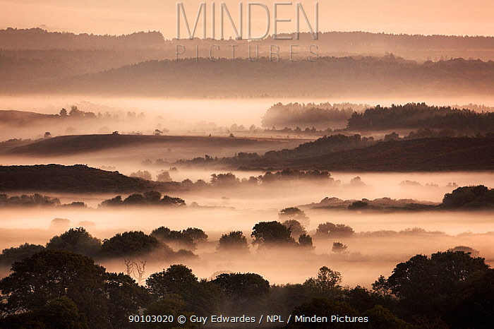 View over Winfrith Heath at dawn, Wool, Dorset, England, September 2006  -  Guy Edwardes/ npl