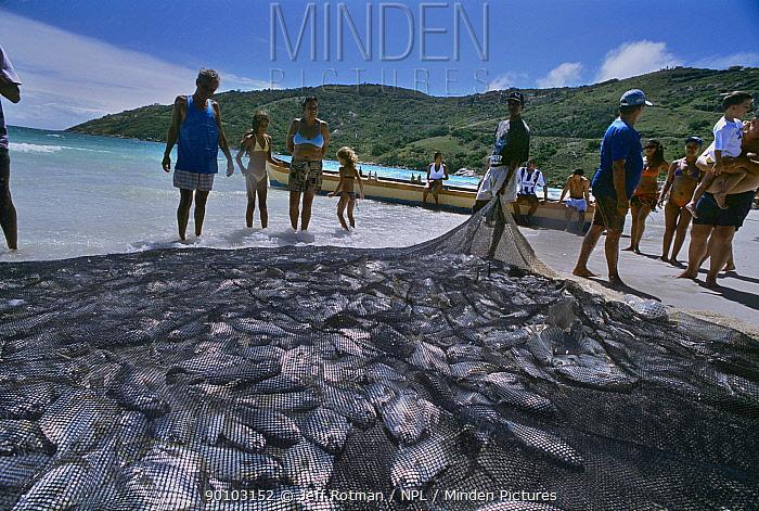 Fishermen hauling in young Jacks caught in gill net, Natal, Brazil, Atlantic Ocean, January 2008  -  Jeff Rotman/ npl