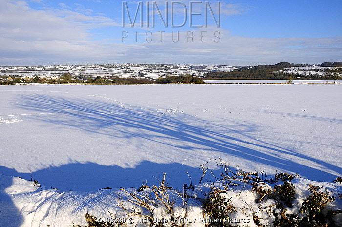 Shadow of tree on snow covered pastureland with rabbit tracks, Wiltshire, UK, winter, December 2009  -  Nick Upton/ npl
