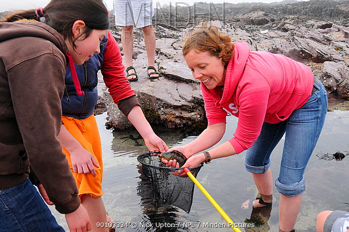 Mother and daughter looking at Rock cook, Small mouthed wrasse (Centrolabrus exoletus) caught in a rock pool on a low tide with a fishing net Cornwall, UK Model released, April 2009  -  Nick Upton/ npl