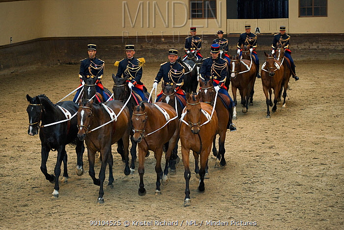 Mounted officers of the Garde R?publicaine (Republican Guard), part of the French Gendarmerie, performing The Tandems mounted on Selle Fran?ais horses at the Caserne des C?lestins, Paris, France October 2009  -  Kristel Richard/ npl