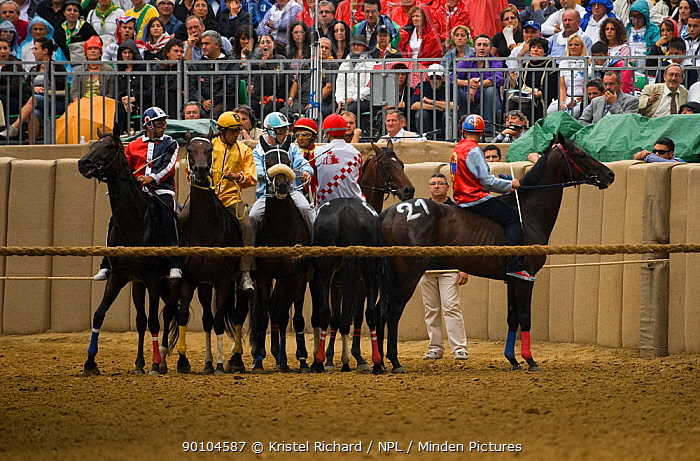 The start of the Palio is always difficult as the nine participating Fantini (jockeys) have to be perfectly aligned behind the cord The Palio, the oldest registered Palio in Italy, takes place on the third Sunday of September, in Asti, Piedmont, Italy, September 2009  -  Kristel Richard/ npl
