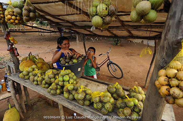 Selling fruit of pequi tree (Caryocar brasiliense) on the road from Crato city to Nova Olinda city, at Chapada do Araripe, Cearai State, Northeastern Brazil April 2009  -  Luiz Claudio Marigo/ npl