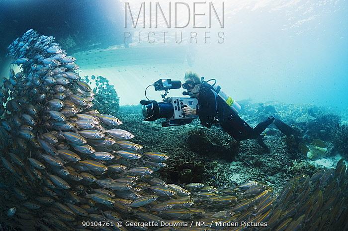 Underwater cameraman Peter Scoones filming shoal of Bigeye scad (Selar crunenophthalmus) under jetty Misool, Raja Empat, West Papua, Indonesia  -  Georgette Douwma/ npl