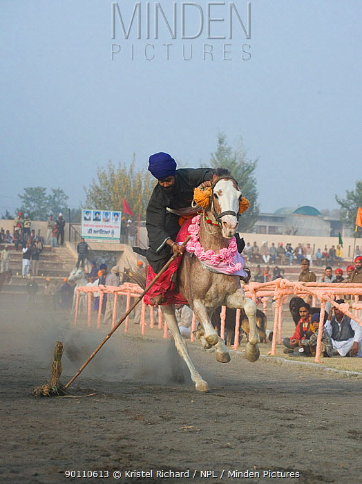 A traditionally dressed Nihang (an armed Sikh soldier) riding his horse competing in a tent pegging competition during the Maghi Mela festival, Mukstar, Punjab, India, January 2010  -  Kristel Richard/ npl