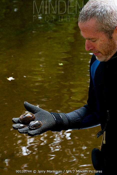 Mussel researcher Ethan Nedeau holding three species of freshwater Mussels (Mytillus genus) from the Ashuelot River Keene, New Hampshire, USA, September 2006  -  Jerry Monkman/ npl