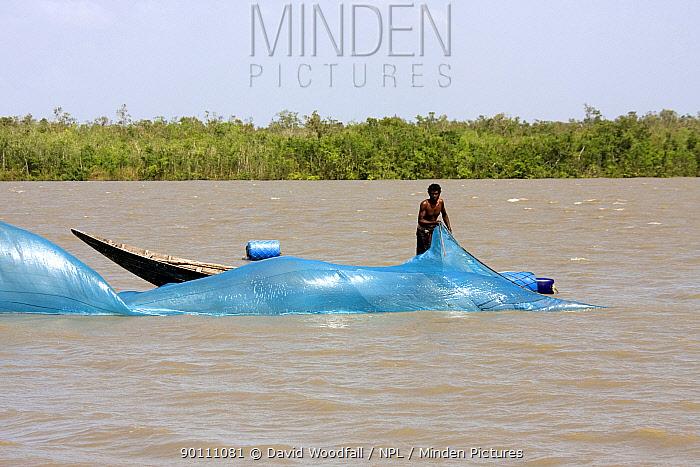 Man fishing with net from boat on shrimp farm, Sundarbans, Bangladesh, November 2008  -  David Woodfall/ npl