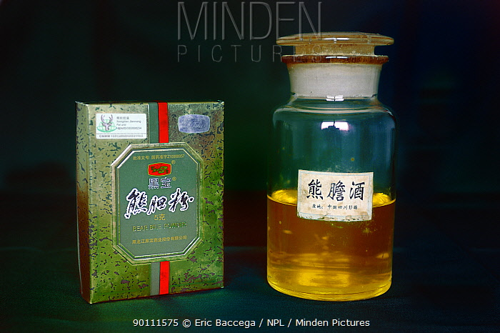 Bile product from Asiatic black bear (Ursus thibetanus) used in traditional Chinese medicine,  -  Eric Baccega/ npl