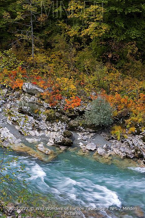 River Tara with autumnal vegetation on bank, Durmitor NP, Montenegro, October 2008  -  WWE/ Radisics/ npl