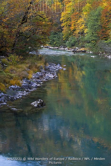 River Tara with Beech trees on banks, Kandija Area, Durmitor NP, Montenegro, October 2008  -  WWE/ Radisics/ npl