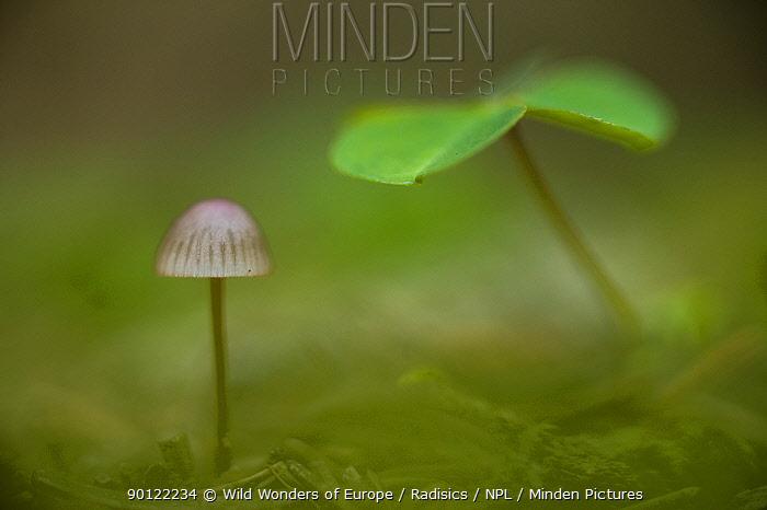 Abstract of seedling and mushroom in forest near Zmijinje Lake, Durmitor NP, Montenegro, October 2008  -  WWE/ Radisics/ npl