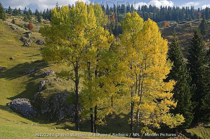 View from Plateau near Crna Gora village, Durmitor NP, Montenegro, October 2008  -  WWE/ Radisics/ npl