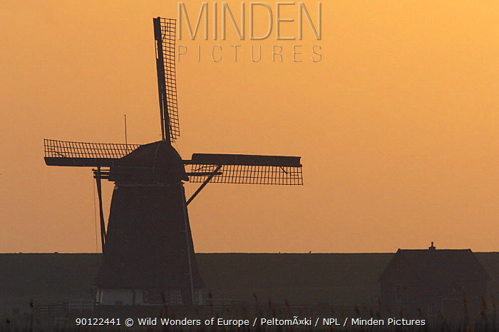 Windmill at sunrise, Texel, Holland, May 2009  -  WWE/ Peltomaki/ npl