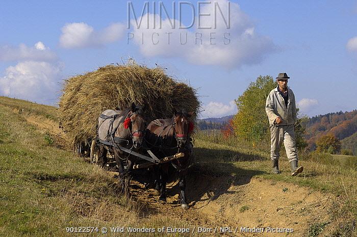 Farmer with traditional horse drawn cart loaded with hay, near Zarnesti, Transylvania, Southern Carpathian Mountains, Romania, October 2008  -  WWE/ Doerr/ npl