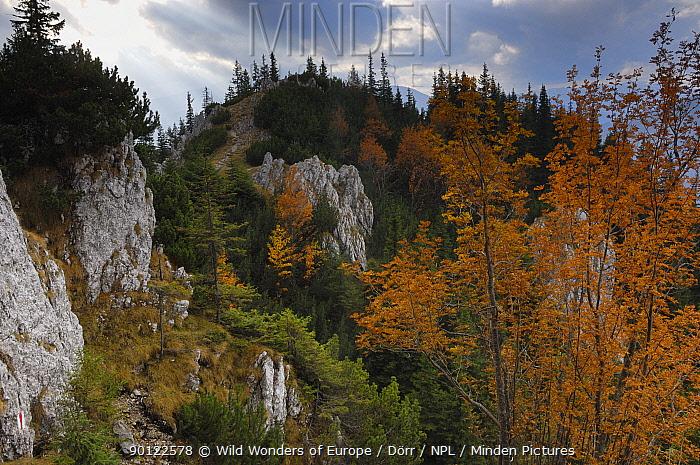 Rocky limestone area La Zaplaz, NP Piatra Craiului, Transylvania, Southern Carpathian Mountains, Romania, October 2008  -  WWE/ Doerr/ npl