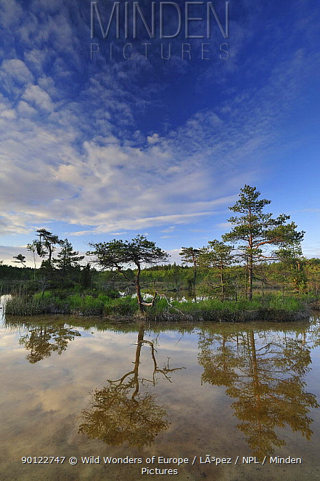 Hydrogen sulphude (H2S) pond with trees reflected in water, Bog forest, Kemeri National Park, Latvia, June 2009  -  WWE/ Lopez/ npl