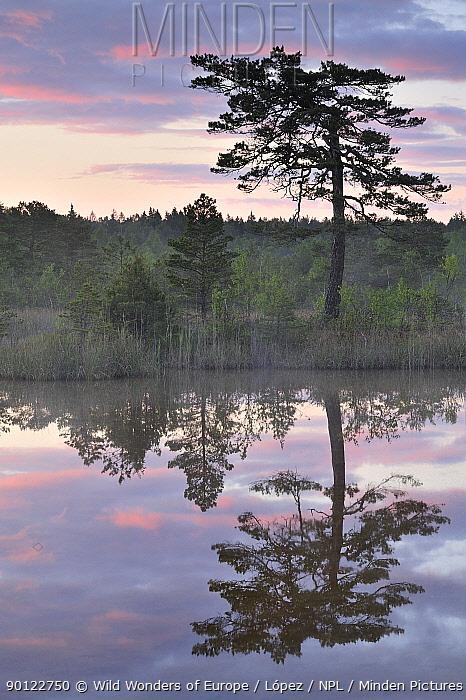 Hydrogen sulphide (H2S) pond with trees reflected in water at dusk, Bog forest, Kemeri National Park, Latvia, June 2009  -  WWE/ Lopez/ npl