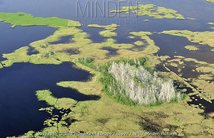 Aerial view of Great cormorant (Phalacrocorax carbo sinensis) colony in dead trees, Kemeri National Park, Latvia, June 2009  -  WWE/ Lopez/ npl