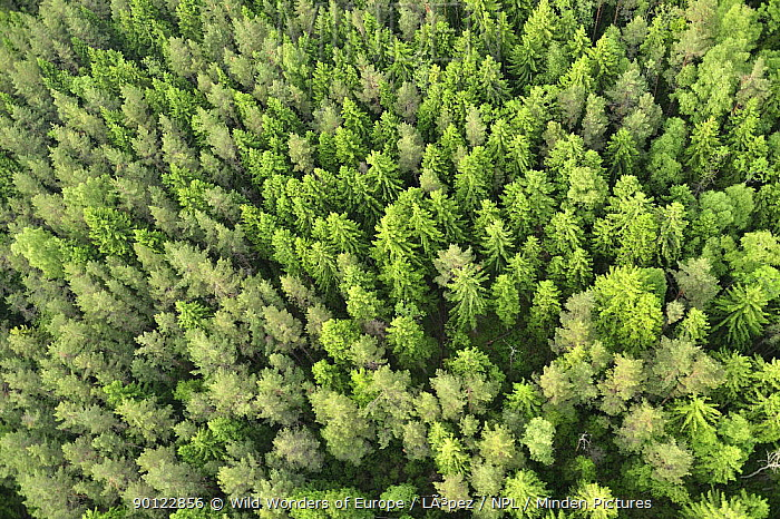 Aerial view of forest, Kemeri National Park, Latvia, June 2009  -  WWE/ Lopez/ npl