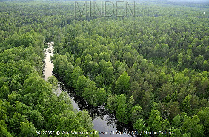 Aerial view of river flowing through forest, Kemeri National Park, Latvia, June 2009  -  WWE/ Lopez/ npl
