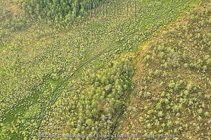 Aerial view of bog, Kemeri National Park, Latvia, June 2009  -  WWE/ Lopez/ npl