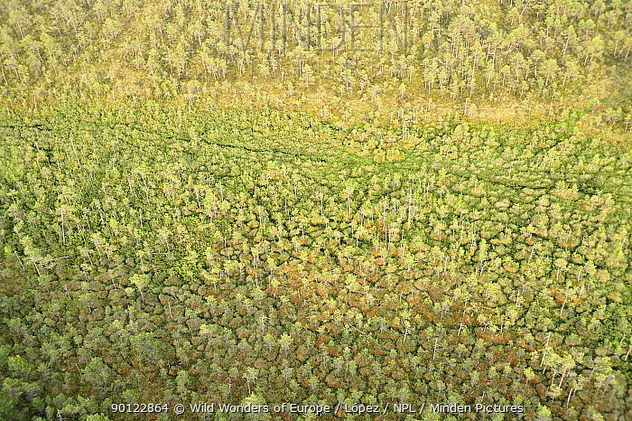 Aerial view of trees growing in bog, Kemeri National Park, Latvia, June 2009  -  WWE/ Lopez/ npl