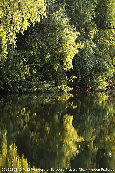 Trees on the river bank reflected in water, Danube Delta, Romania, May 2009  -  WWE/ Presti/ npl
