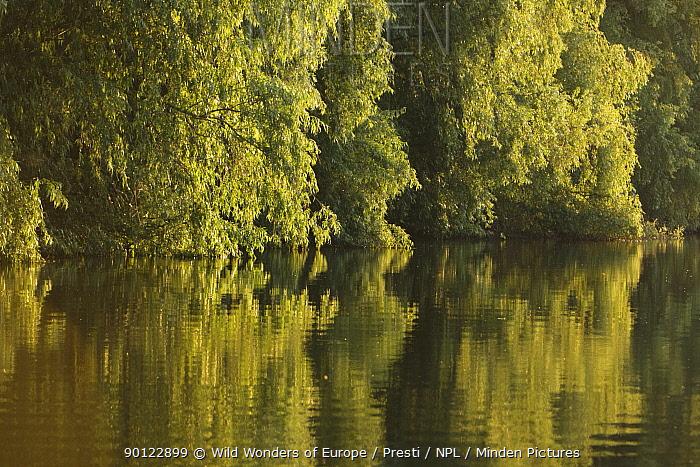 Trees on the river bank reflected in water, Danube Delta Scenery, Romania, May 2009  -  WWE/ Presti/ npl