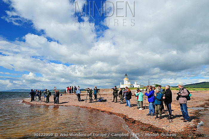 Visitors and local people watching Bottlenosed dolphins (Tursiops truncatus) at Chanonry Point, Moray Firth, Nr Inverness, Scotland, June 2008  -  WWE/ Campbell/ npl