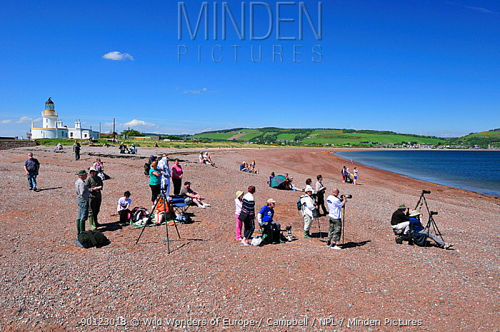 Visitors and local people gathering to watch Bottlenosed dolphins (Tursiops truncatus) on an incoming tide at Chanonry Point, Moray Firth, Nr Inverness, Scotland, May 2009  -  WWE/ Campbell/ npl