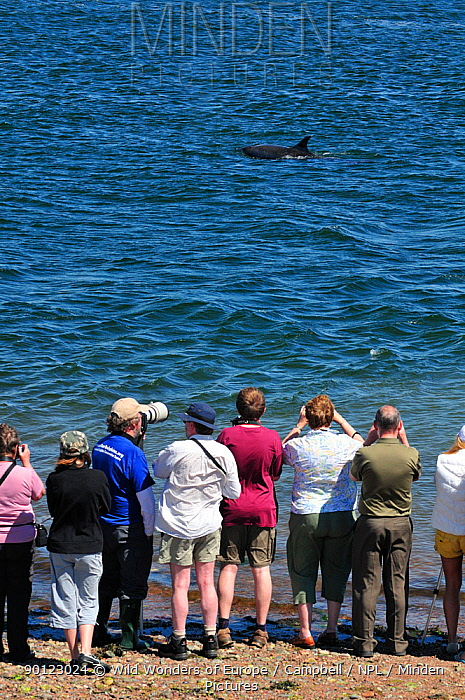 Rear view of visitors and local people watching Bottlenosed dolphins (Tursiops truncatus) on an incoming tide at Chanonry Point, Moray Firth, Nr Inverness, Scotland, May 2009  -  WWE/ Campbell/ npl