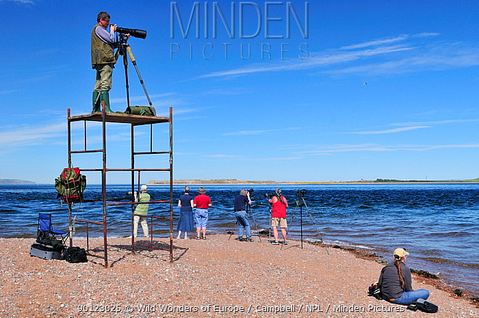 Laurie Campbell photographing Bottlenosed dolphins (Tursiops truncatus) from scaffold tower for Wild Wonders of Europe project, Moray Firth, Nr Inverness, Scotland, May 2009  -  WWE/ Campbell/ npl