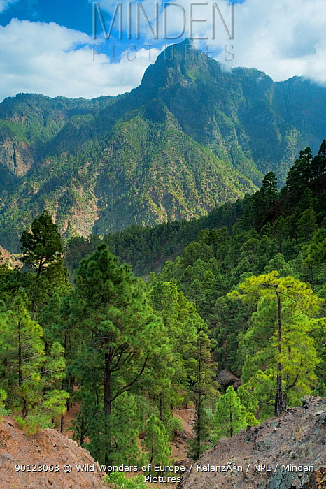 Berjenado peak viewed from the Caldera, Caldera de Taburiente National Park, La Palma, Canary Islands, Spain, March 2009  -  WWE/ Relanzon/ npl