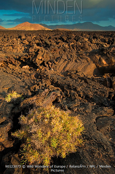 Volcanic landscape, Volcanoes Natural Park, Lanzarote, Canary Islands, Spain, March 2009  -  WWE/ Relanzon/ npl