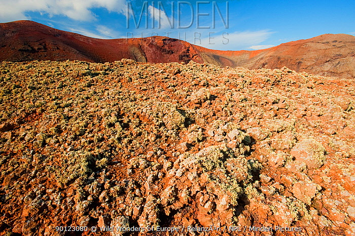 Lichens growing in volcanic landscapes, with craters and lava fields, Timanfaya National Park, Lanzarote, Canary Islands, Spain, March 2009  -  WWE/ Relanzon/ npl