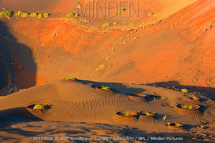 Volcanic landscape, Timanfaya National Park, Lanzarote, Canary Islands, Spain, March 2009  -  WWE/ Relanzon/ npl