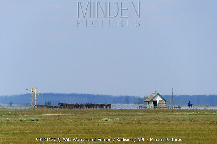 Horses with herdman on one with a mirage (fata morgana) Hortobagy National Park, Hungary, July 2009  -  WWE/ Radisics/ npl