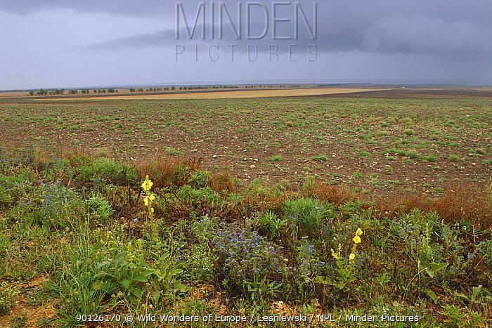 Steppe fields with flowers, Kerch Peninsula, Crimea, Ukraine, July 2009  -  WWE/ Lesniewski/ npl