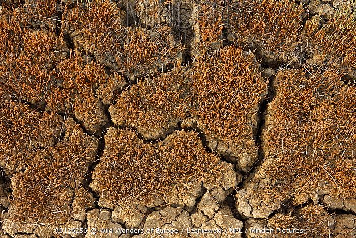 Cracked soil in a dried out stream, Bagerova Steppe, Kerch Peninsula, Crimea, Ukraine, July 2009  -  WWE/ Lesniewski/ npl