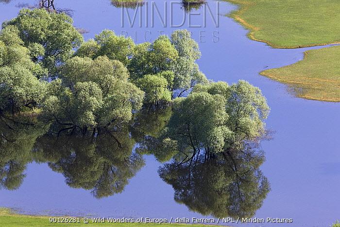 Flooded trees, mainly White willow (Salix alba) Livanjsko Polje (karst plateau) Bosnia and Herzegovinam May 2009  -  WWE/ della Ferrera/ npl