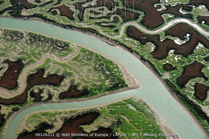 Aerial view of marshes with Seaweed exposed at low tide, Bah?a de C�diz Natural Park, C�diz, Andalusia, Spain, February 2009  -  WWE/ Lopez/ npl