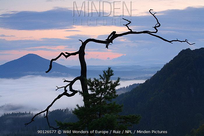 View from Vilhemina Vyhlidka at sunset with mist in valley, Ceske Svycarsko, Bohemian Switzerland National Park, Czech Republic, September 2008  -  WWE/ Ruiz/ npl