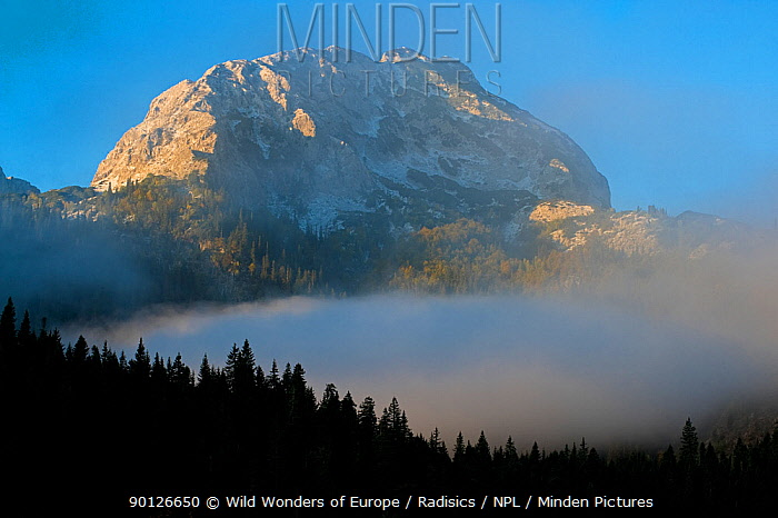 Big Bear peak with morning mist over forest, Durmitor NP, Montenegro, October 2008  -  WWE/ Radisics/ npl