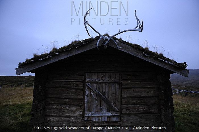 Small wood building with reindeer antlers over door, Forollhogna National Park, Norway, September 2008  -  WWE/ Munier/ npl