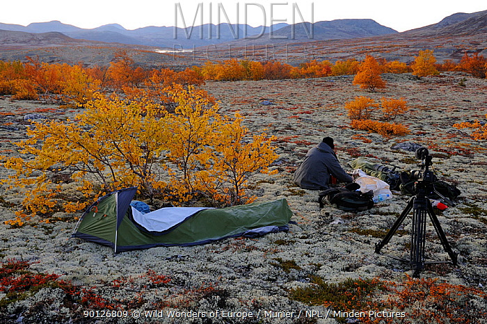 Photographer, Vincent Munier, at campsite, Forollhogna National Park, Norway, September 2008 On location for Wild Wonders of Europe  -  WWE/ Munier/ npl