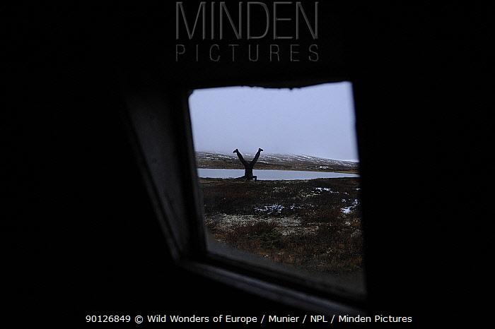Photographer, Vincent Munier, doing a headstand, seen through a window, Forollhogna National Park, Norway, September 2008  -  WWE/ Munier/ npl