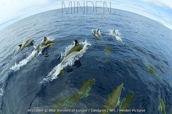 Common dolphins (Delphinus delphis) surfacing, Fisheye lens Pico, Azores, Portugal, June 2009  -  WWE/ Lundgren/ npl