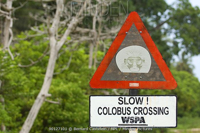 Speed warning sign near Jozani Chwaka Bay NP, Zanzibar, Tanzania, to protect Zanzibar Red Colobus monkeys (Piliocolobus kirkii)  -  Bernard Castelein/ npl