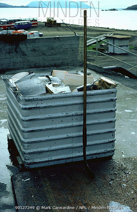 Whaling, Container of Fin whale meat, Hvalfjordur, West Iceland, 1993 (Balaenoptera  -  Mark Carwardine/ npl