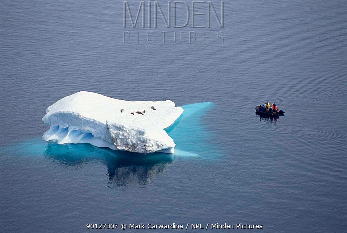 Tourists in dinghy watching Crabeater seals on iceberg, Antarctica  -  Mark Carwardine/ npl